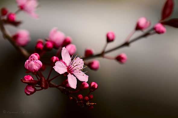 As 10 flores mais lindas do mundo