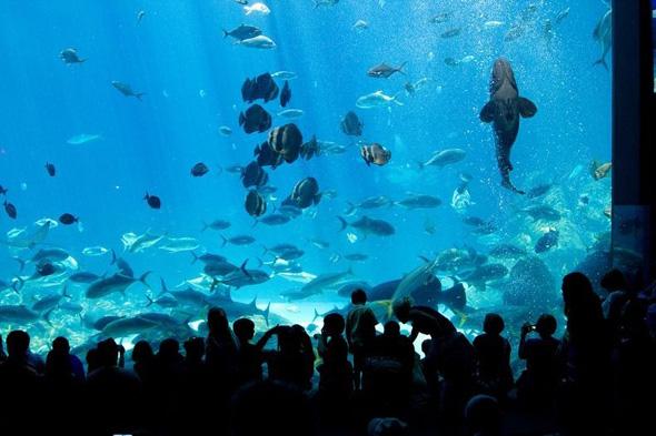maior-aquario-do-mundo-01