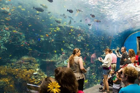 maior-aquario-do-mundo-03