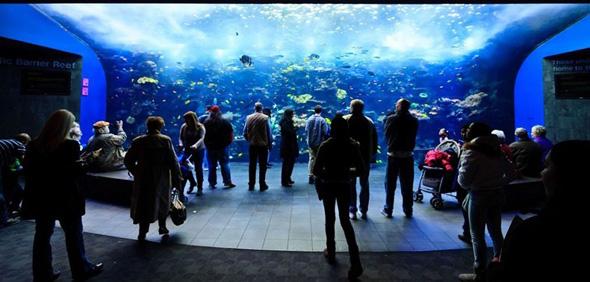 maior-aquario-do-mundo-04