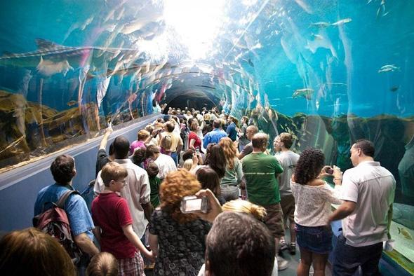 maior-aquario-do-mundo-06