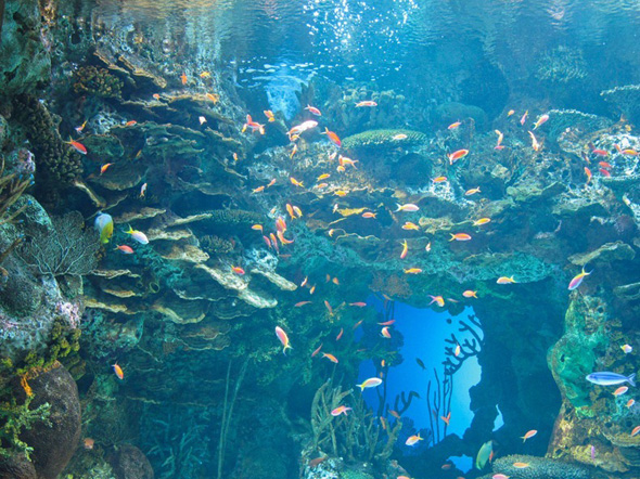 maior-aquario-do-mundo-08