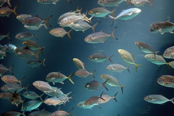 maior-aquario-do-mundo-09
