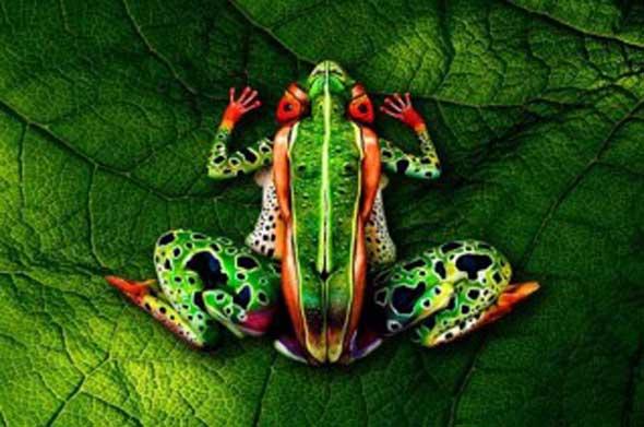 pinturas-corporais-incríveis-3