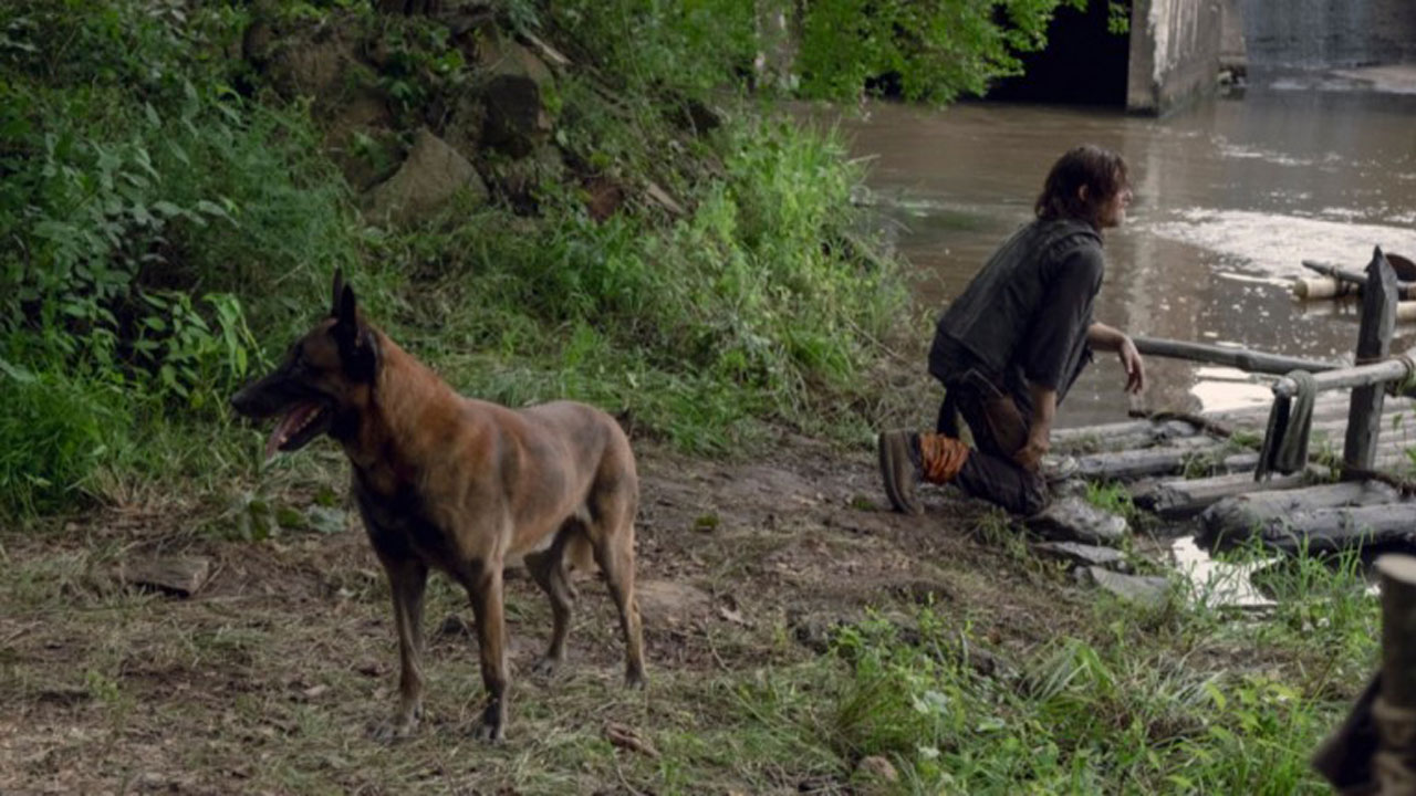 Cão, o cachorro de Daryl, no 7º episódio da 9ª temporada de The Walking Dead.