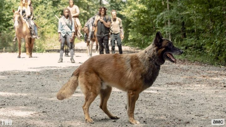 Cão, o cachorro de Daryl, no 9º episódio da 9ª temporada de The Walking Dead.